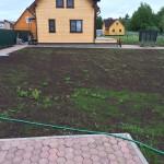 vskhodit-gazonnaya-trova